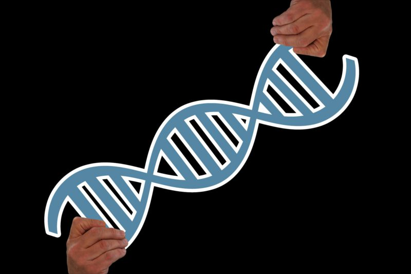 Geny – czynnik, który prawdę powiedziawszy ma niewielki wpływ na rozwój otyłości
